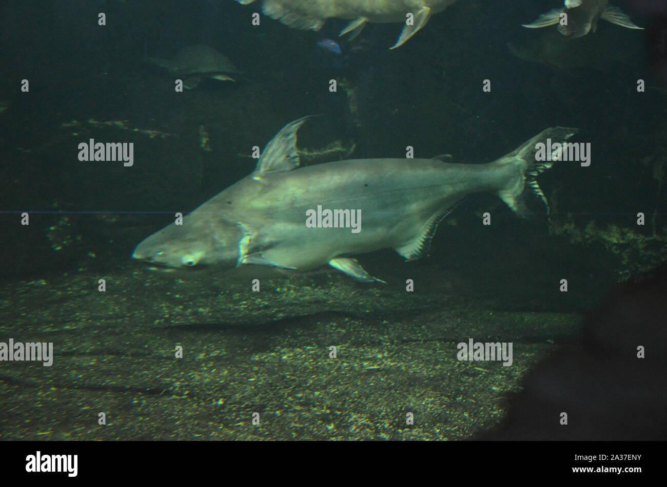 Shark in the aquarium of Berlin (Germany) Stock Photo