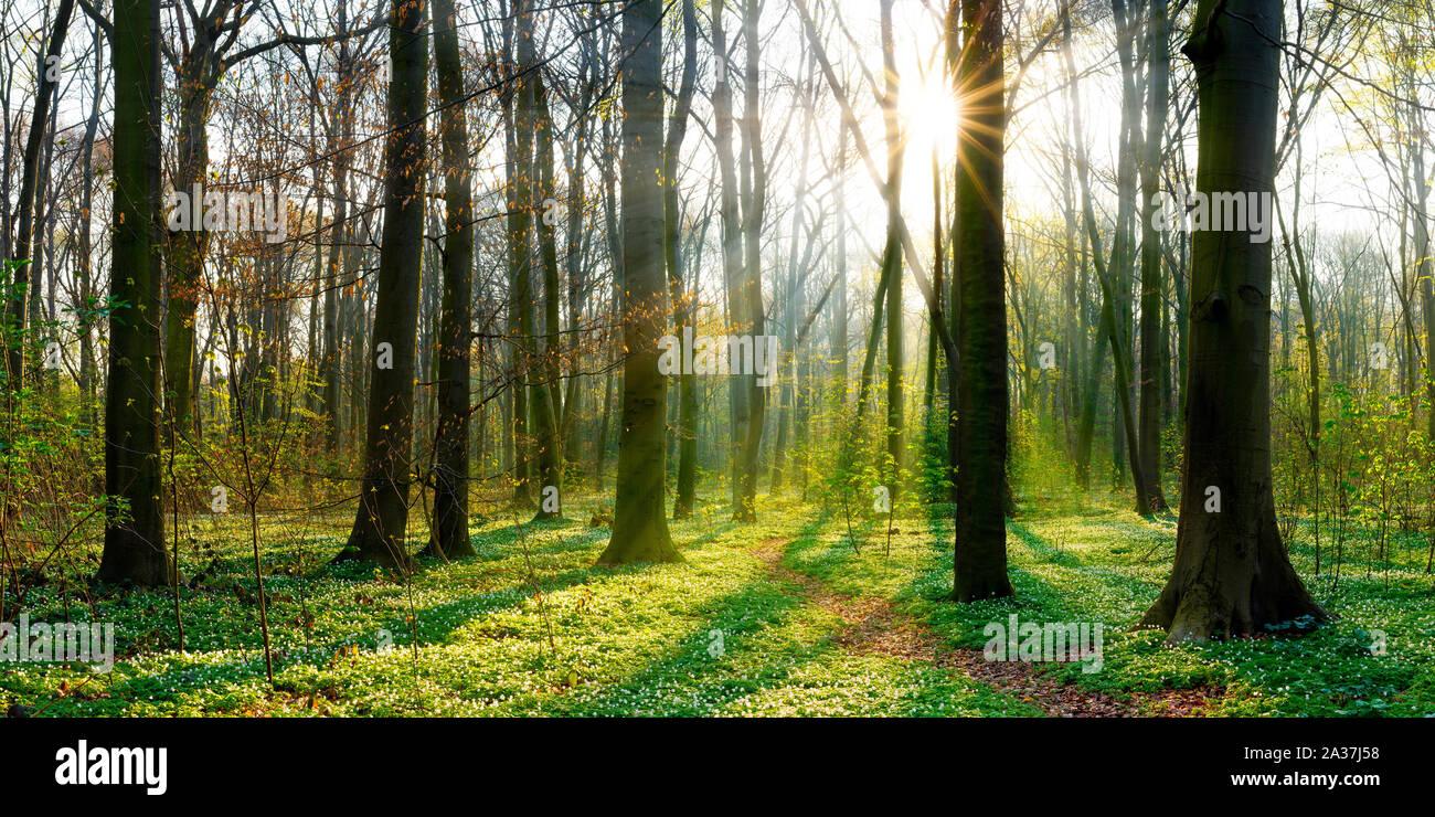Sonnenaufgang im Wald Stock Photo