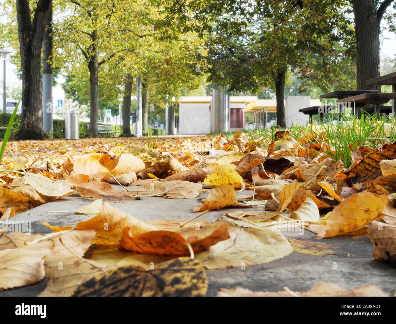 Laub auf dem Boden in einem Park in Zürich Stock Photo