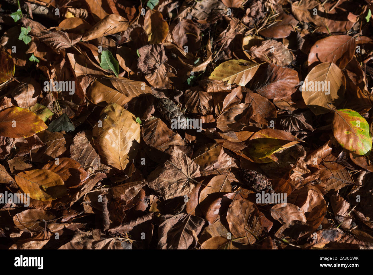 Autumn leaves on floor abstract image Stock Photo