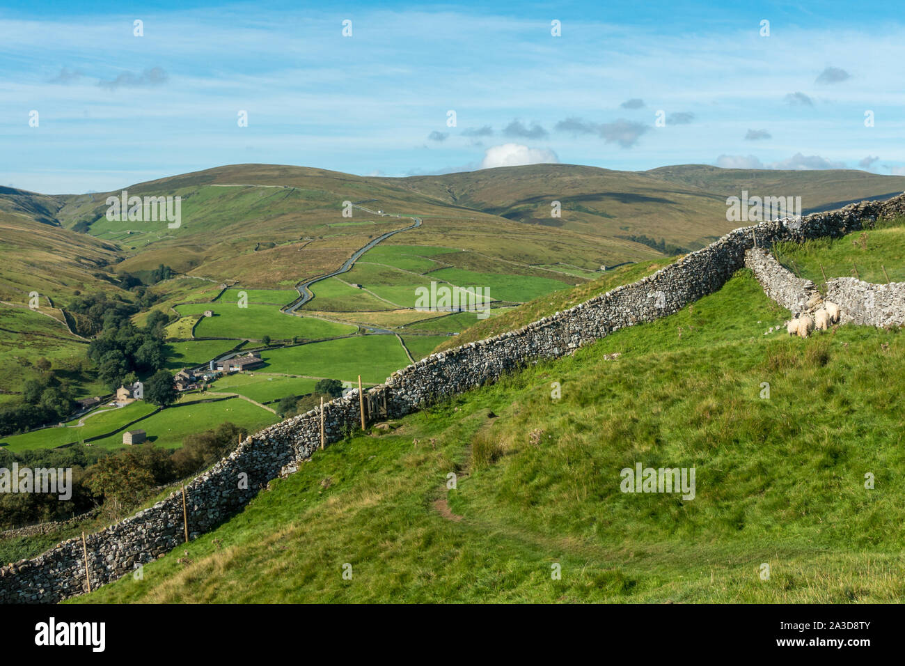 Looking at Buttertubs pass (famous road biking hill climb) in Swaledale from a distance & lots of old stone barns, Yorkshire Dales National Park Stock Photo