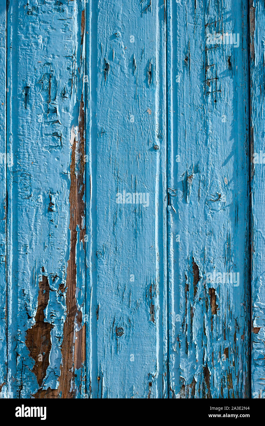 Fence from old blue boards. The boards are wide, with cracked old paint, arranged vertically. Vertical frame. Stock Photo