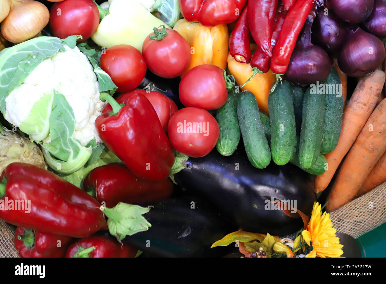 Various freshly picked  harvested vegetables in basket as a background. Autumn foods products as a background. Healthy organic harvest vegetables and Stock Photo