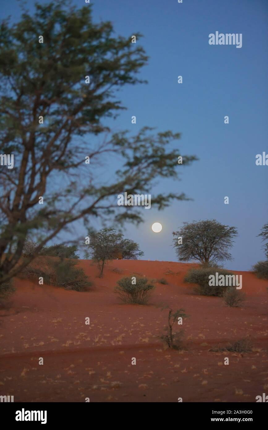 Namibia, Hardap province, Bagatelle Kalahari reserve, dunes under moonlight Stock Photo