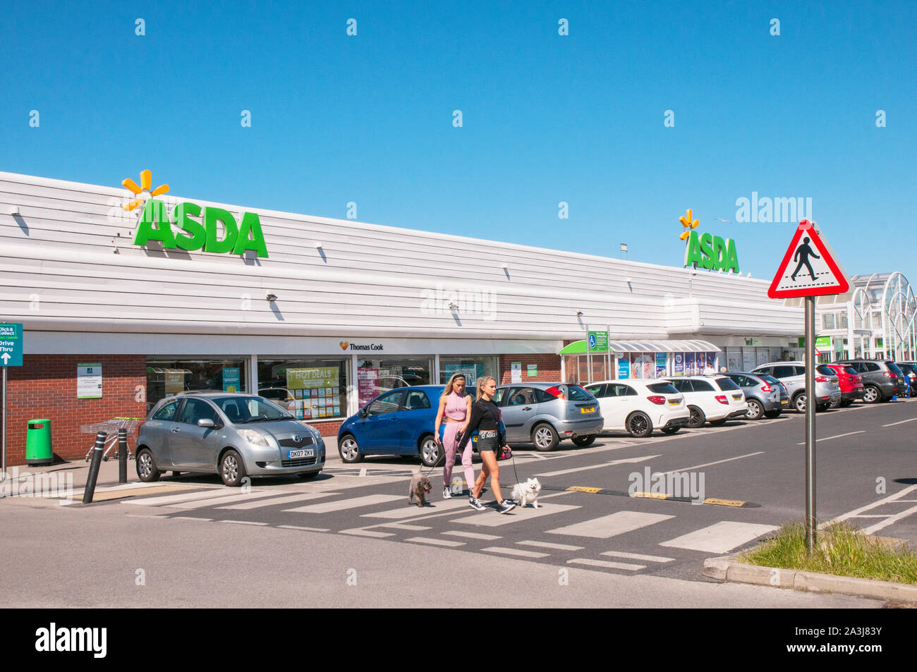 Two young ladies with small dogs useing zebra crossing at Asda store on Cherry Tree Retail Park Cherry Tree Road Blackpool Lancashire England UK Stock Photo