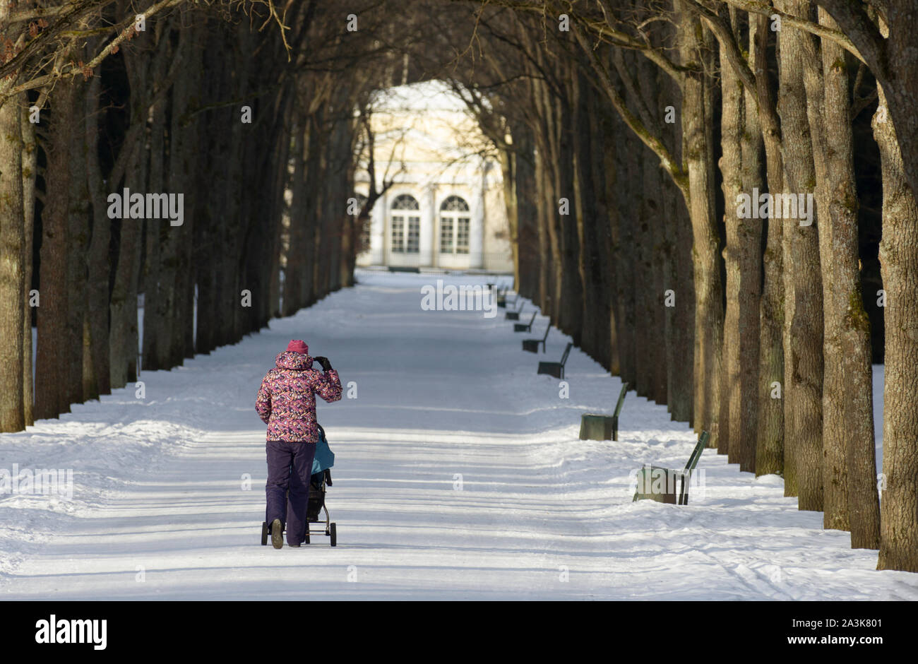 Unidentified woman with her back to the viewer in the distance adjusts her hood and walks along the snowy path of the park with a baby stroller Stock Photo
