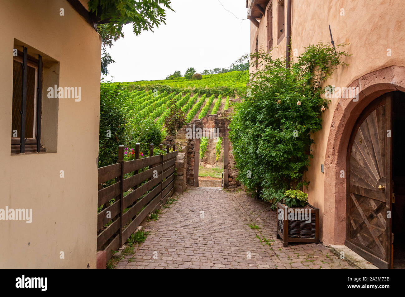 Riquewihr in Alsace, France. Enchanting medieval village, along the wine road that connects Colmar to Strasbourg. View of the vineyards from the old v Stock Photo