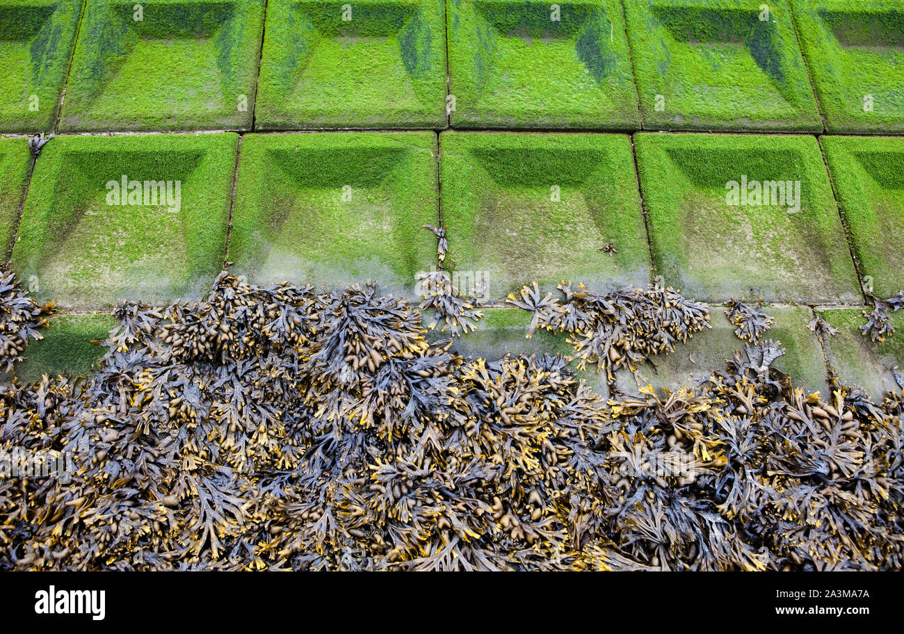 Seaweed-covered Seawall, North Sea, Lower Saxony, Germany, Europe Stock Photo
