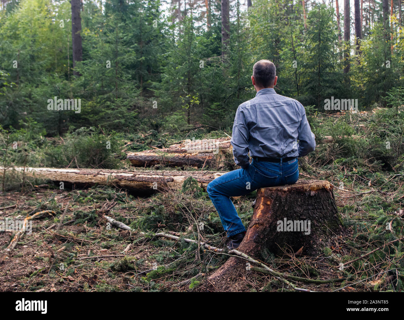 rear view of a man in shirt and jeans looking at felled trees sitting on tree stump Stock Photo