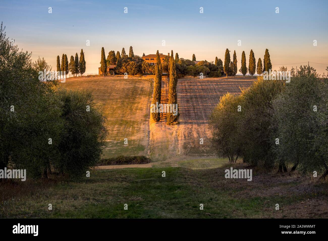 CYPRESS AND OLIVE TREE-LINED ROAD LEADING TO A FARM, SIENA, TUSCANY, ITALY Stock Photo