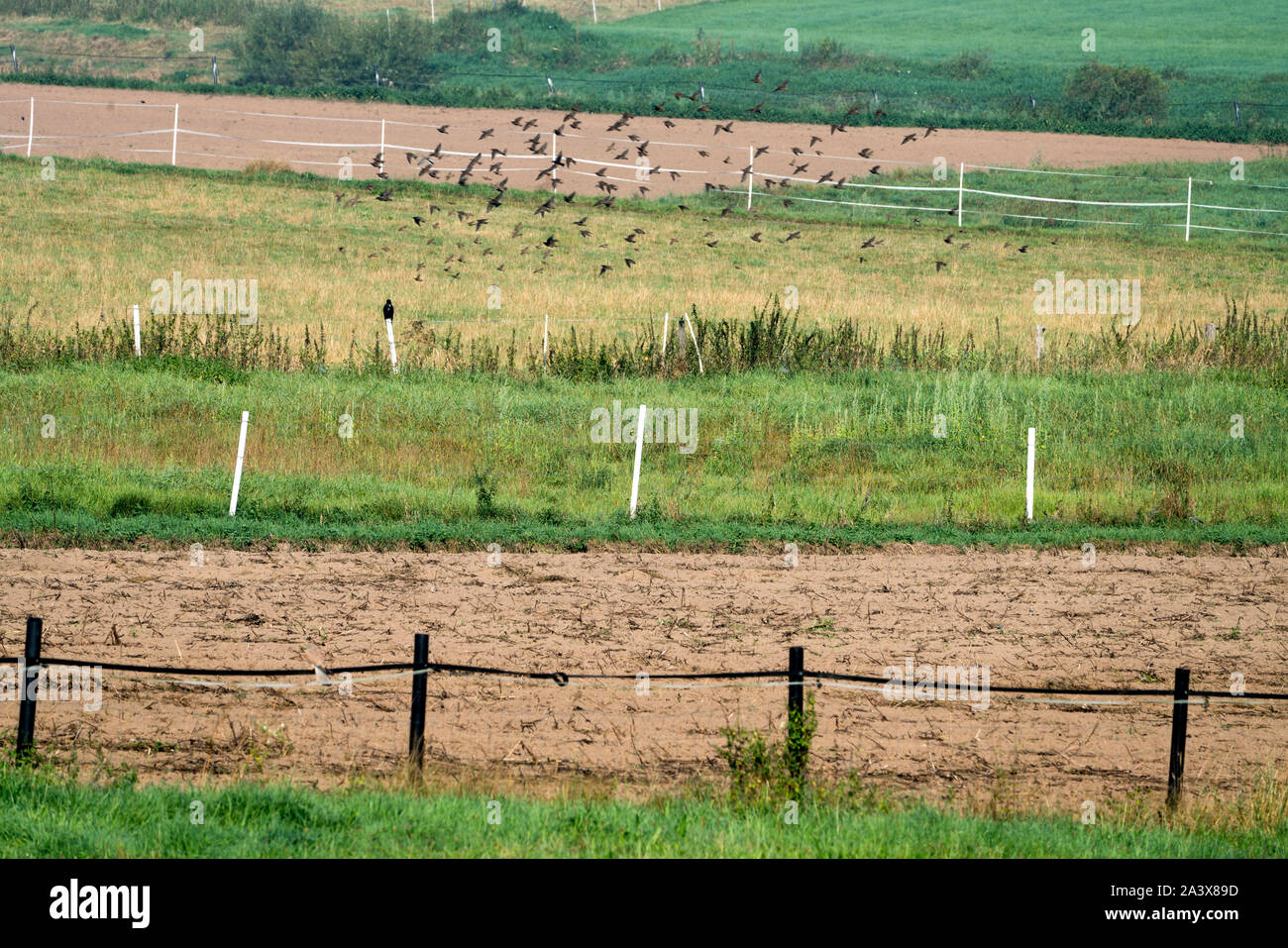 Fields with fences, Oberweser, Weser Uplands, Weserbergland, Hesse, Germany Stock Photo