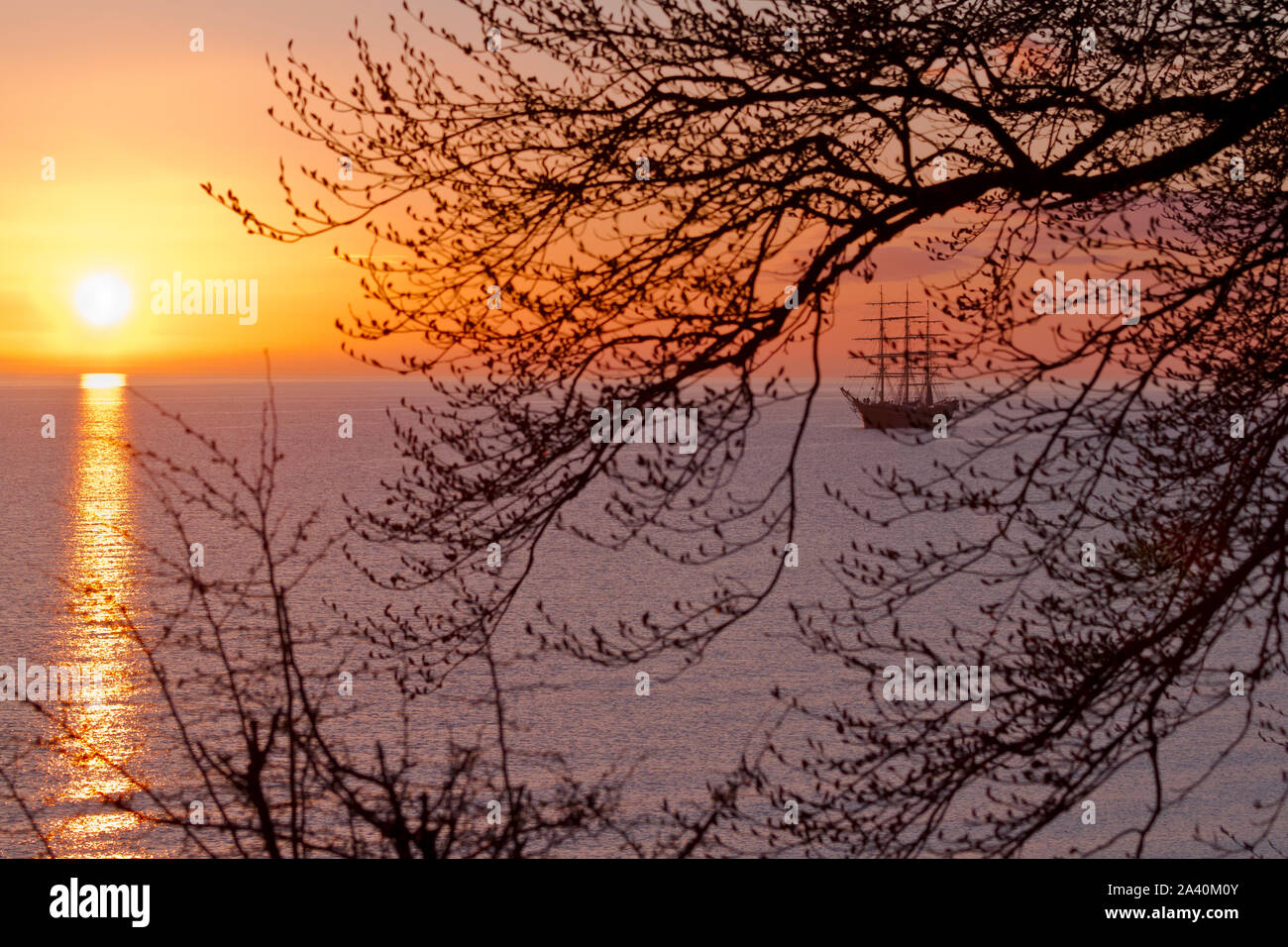 Georg Stage, a three-masted full-rigged Danish training tall ship in sunrise in the Sound in Denmark. A spring morning seen through branches and twigs Stock Photo