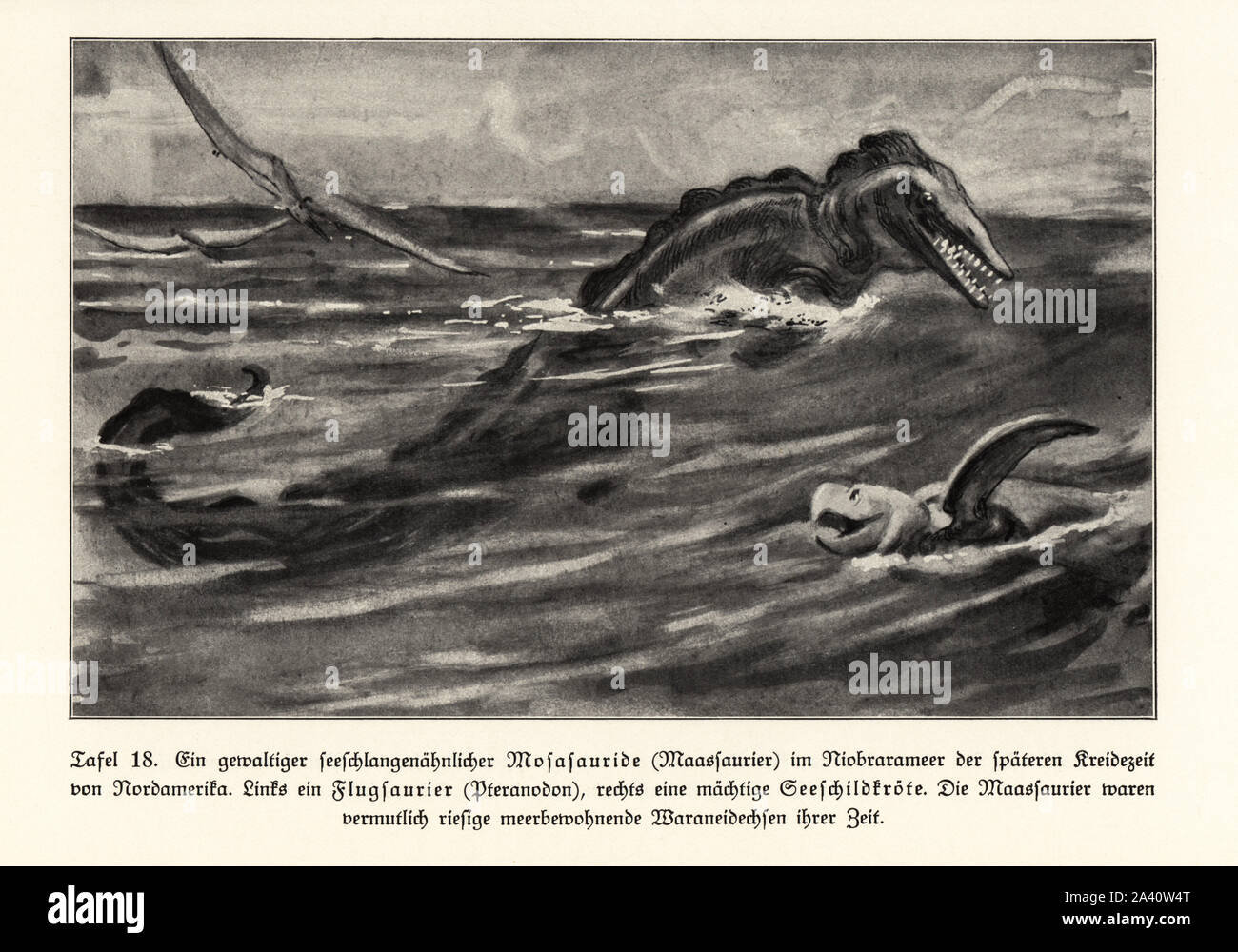 mosasaur high resolution stock photography and images alamy https www alamy com an extinct seasnake like mosasaur in the niobrara sea north america late cretaceous a pterosaur pteranodon at left and sea turtle at right mosasaurs were probably giant sea monitor lizards of their time illustration from wilhelm bolsches das leben der urwelt prehistoric life georg dollheimer leipzig 1932 image329475352 html