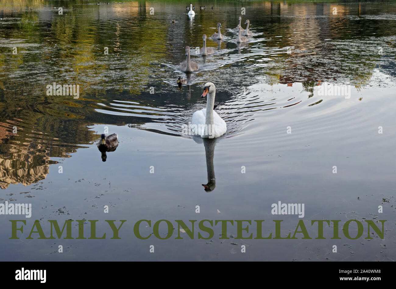 FAMILY CONSTELLATION Stock Photo