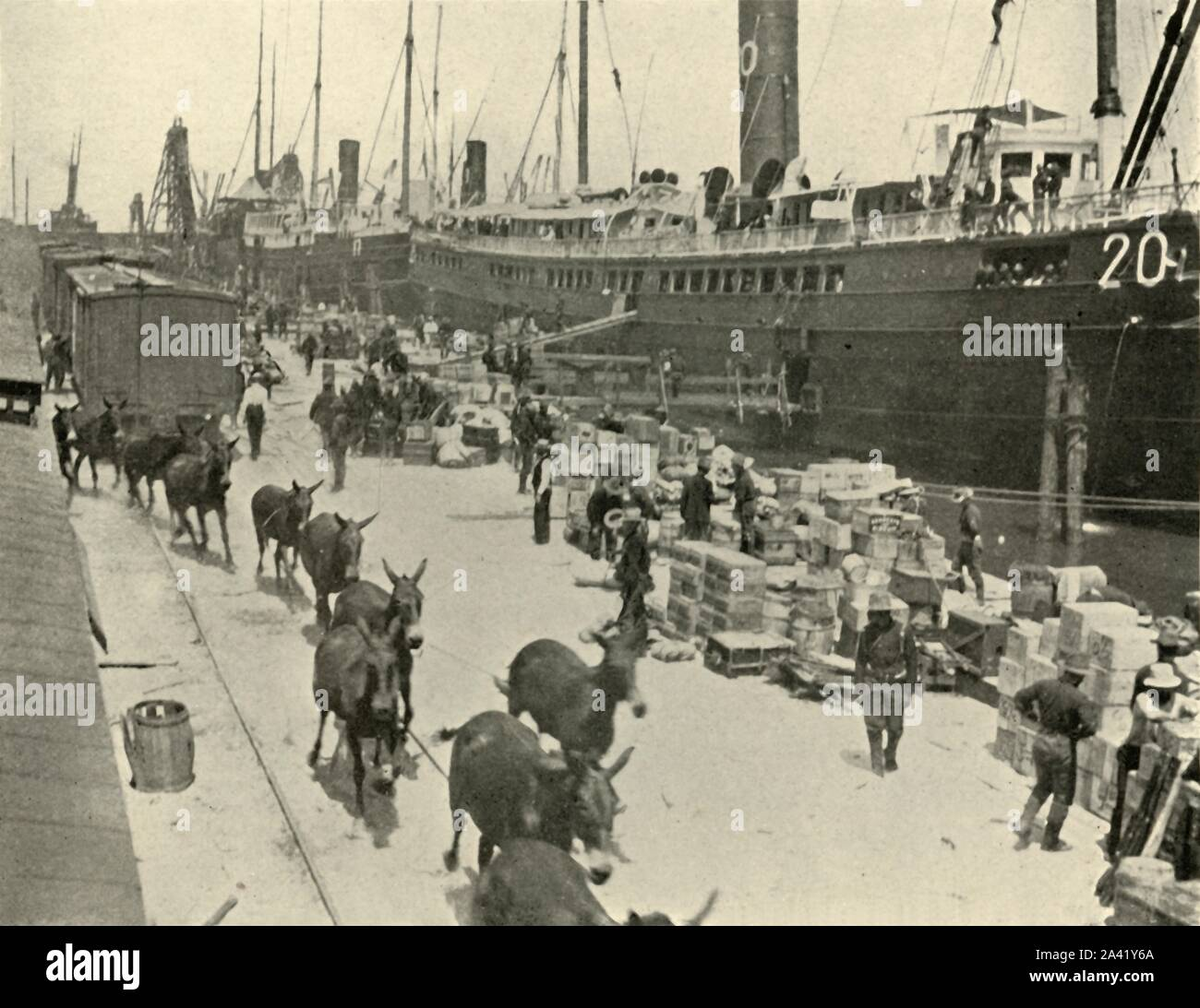 """Troopships at Port Tampa, Florida, USA, Spanish-American War, 10 June 1898, (1899). Ships preparing to leave for Cuba. 'The mules and horses coming up the track had just been liberated from the various ships'. From """"The Little I saw of Cuba"""" by Burr McIntosh, with photographs by the author. (In 1898, American actor and journalist William Burr McIntosh went to Cuba to cover the Spanish-American War for """"Leslie's Weekly"""" as a reporter and photographer). [F. Tennyson Neely, London & New York, 1899] Stock Photo"""