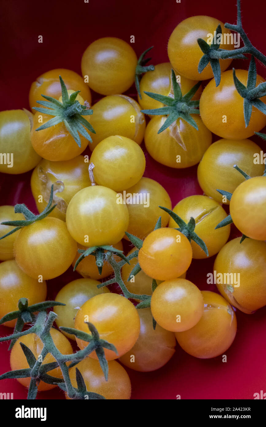 Closeup photo of cherry tomatoes with a red background. Stock Photo