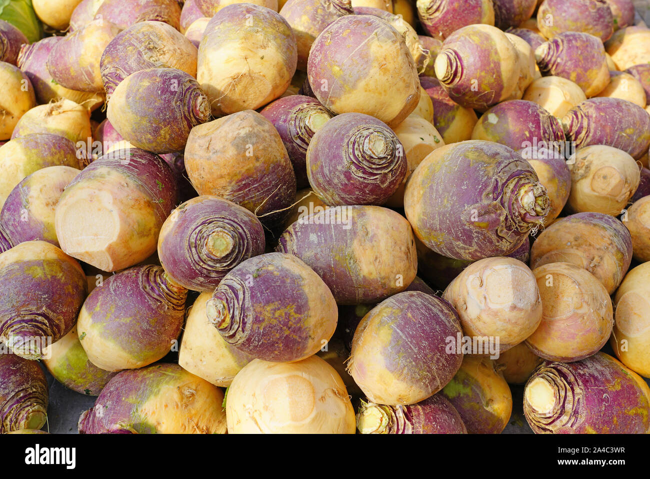 Purple And White Rutabaga Swede Root Vegetable At A Farmers Market In The Fall Stock Photo Alamy