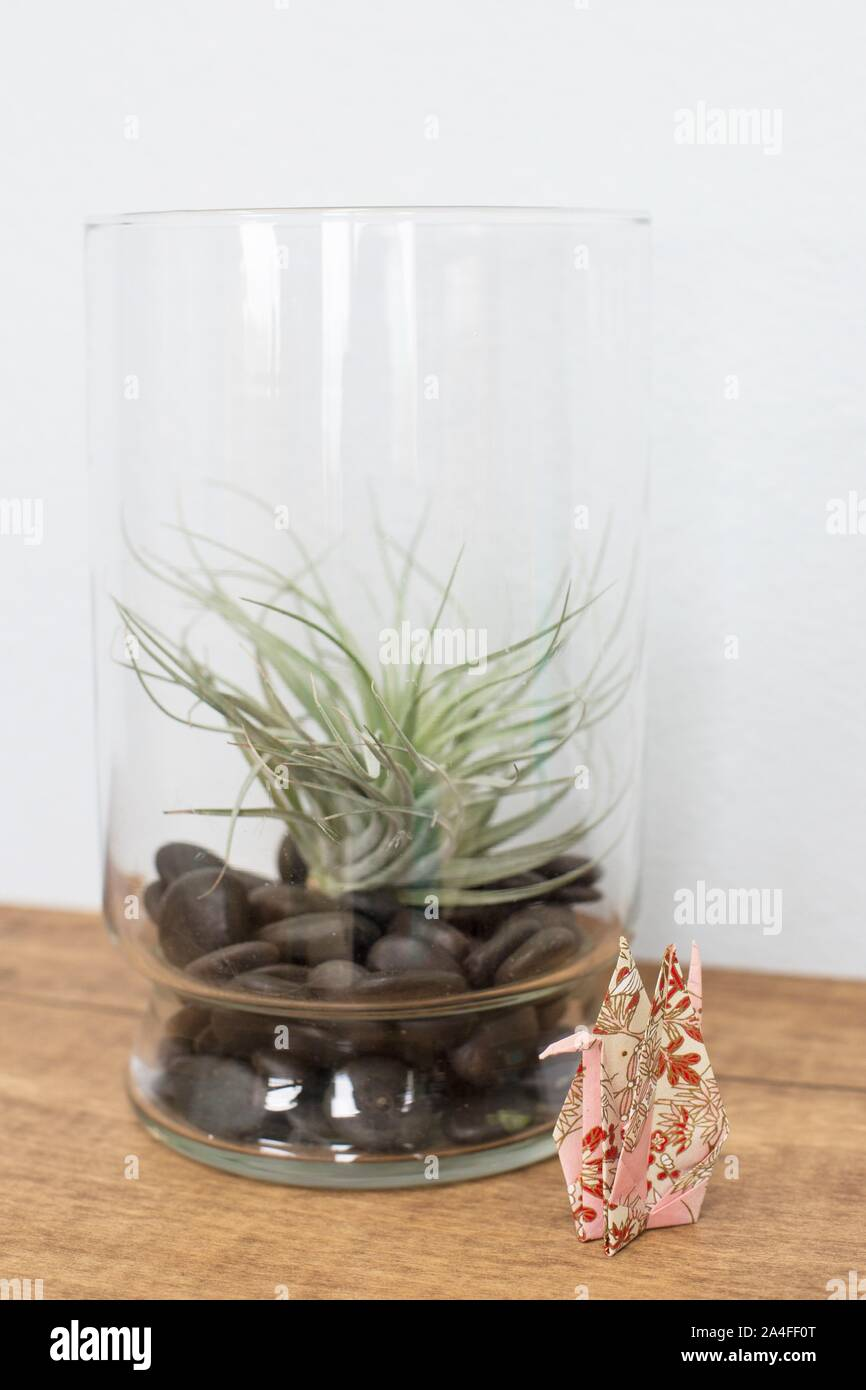 A Folded Paper Origami Crane Next To An Air Plant In A Glass Terrarium Stock Photo Alamy