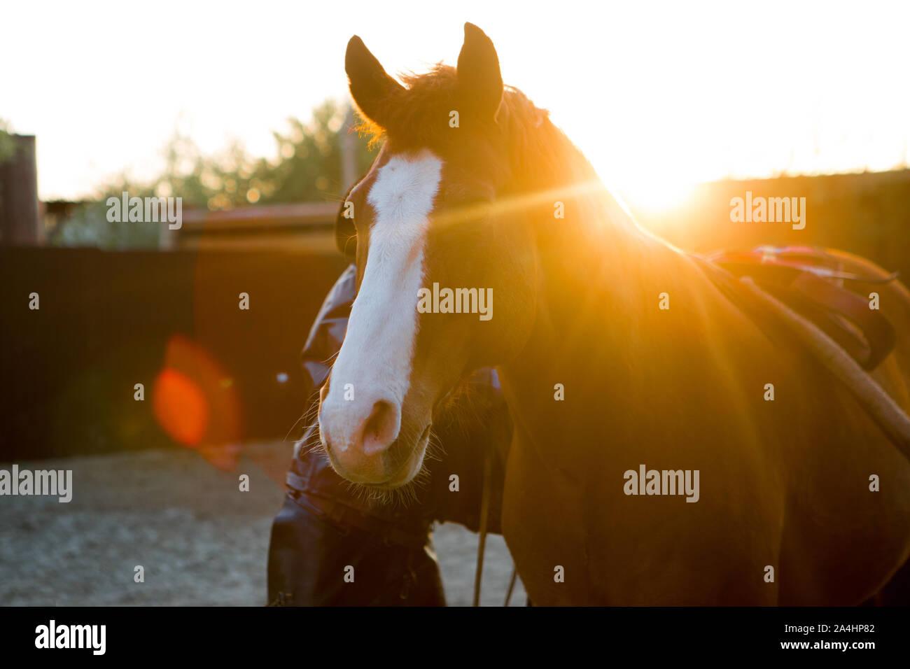 Beautiful Horse At Sunset Stock Photo Alamy