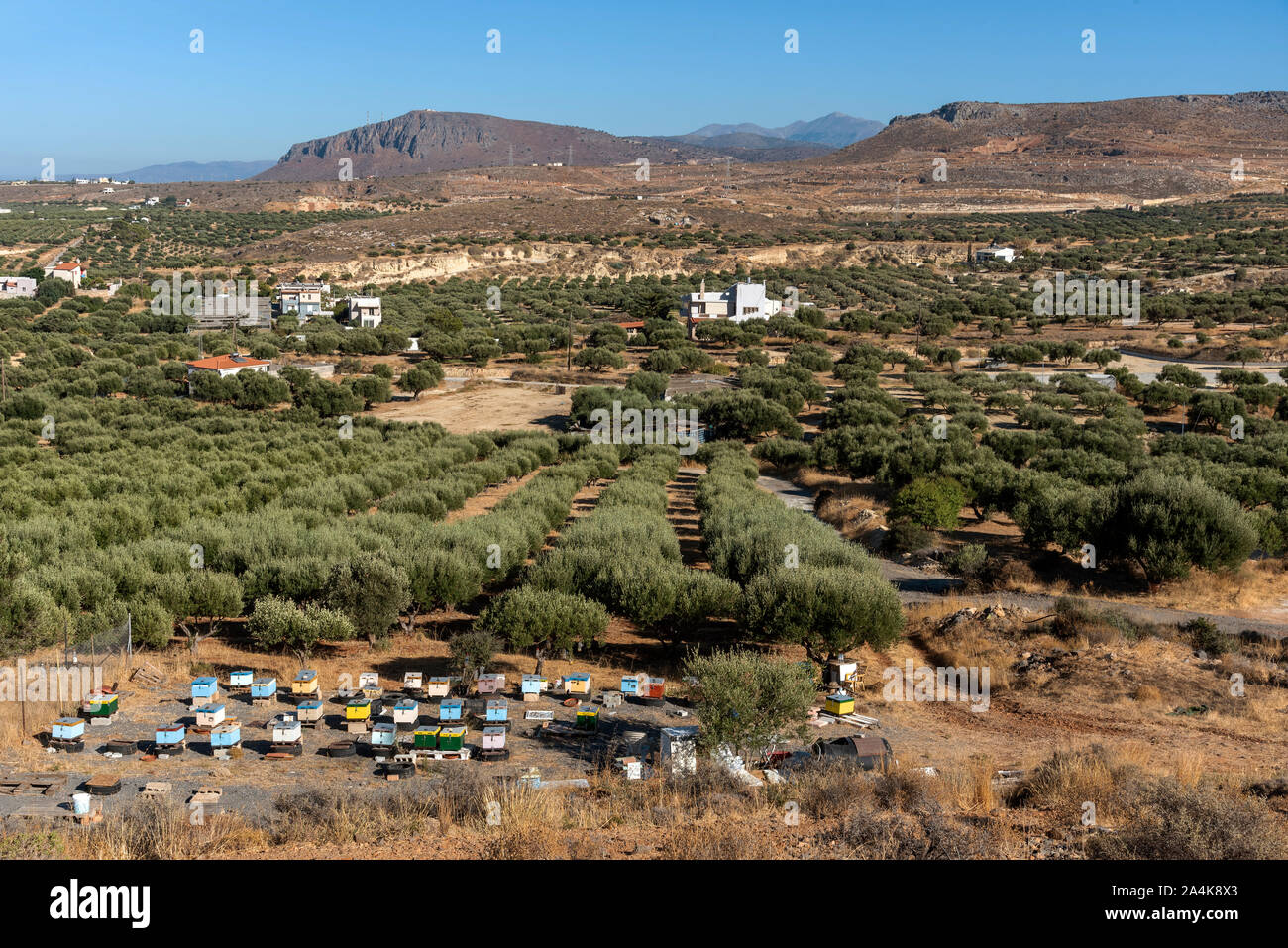 Kato Gouves, Crete, Greece. October 2019.  Olive trees and bee hives on farmland close to Gouves on the northern coast. Stock Photo