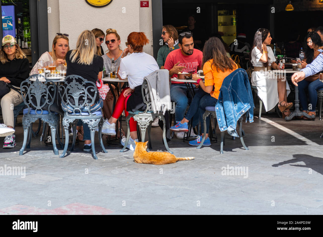 Tourists and local Turkish dine alongside an orange stray tabby cat at an outdoor cafe restaurant in the Galata District of Istanbul Turkey Stock Photo