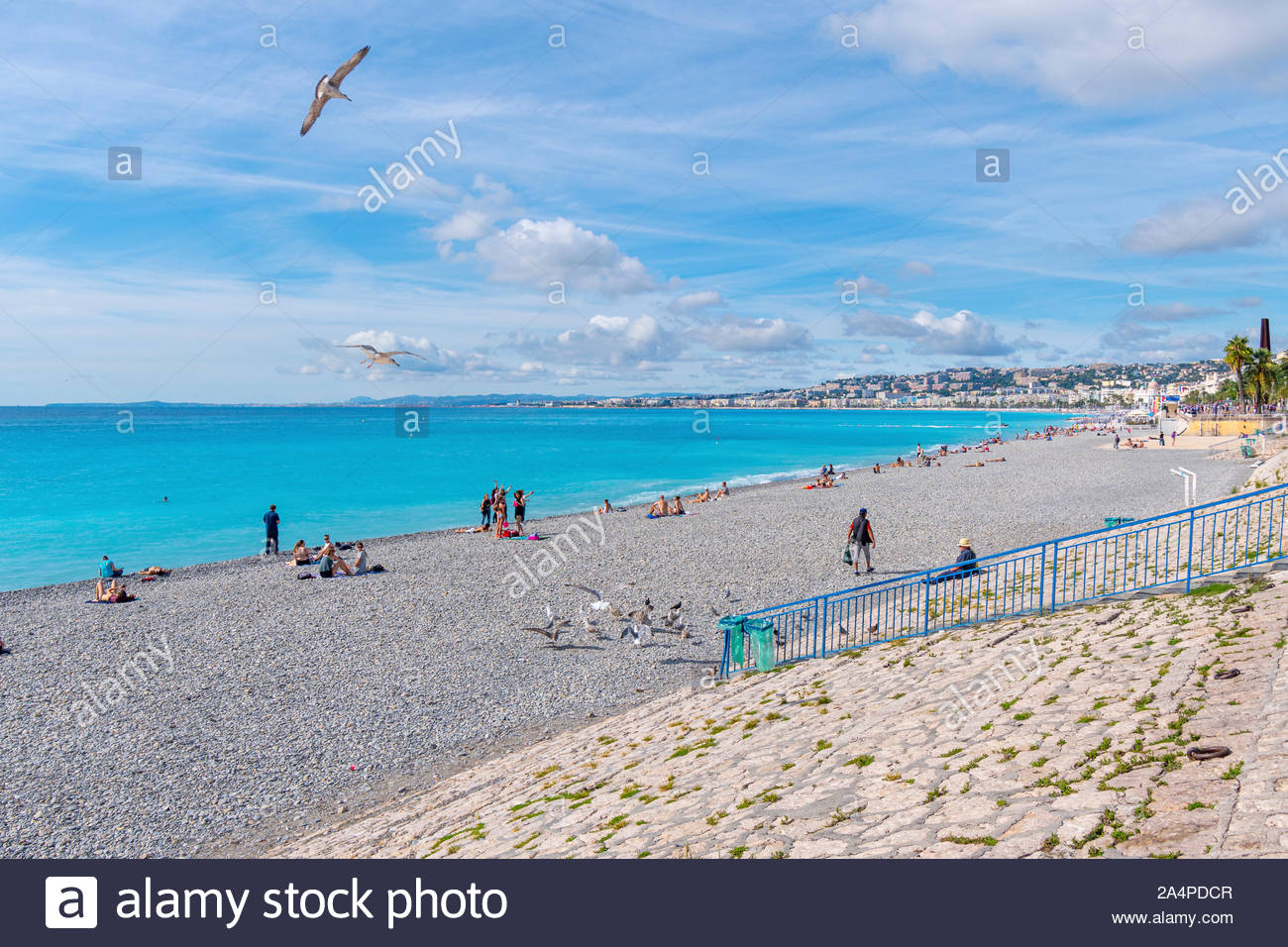 A seagull flies about tourists on the public beach on the French Riviera of the Mediterranean Sea in Nice France. Stock Photo