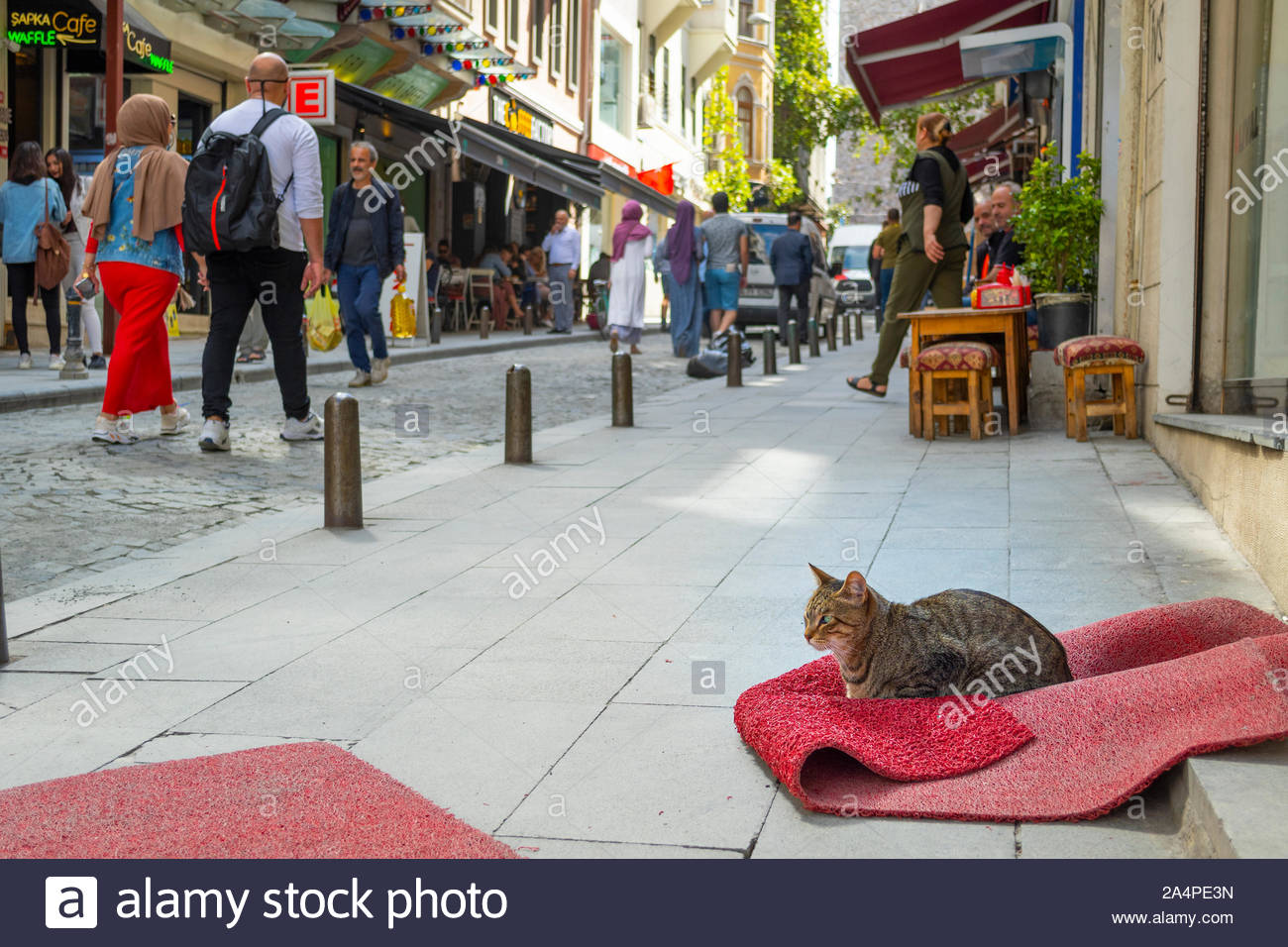 A stray tabby cat sits on a crumpled rug outside a shop in the Galata Karakoy district of Istanbul Turkey as tourists and Turks pass by on the street Stock Photo