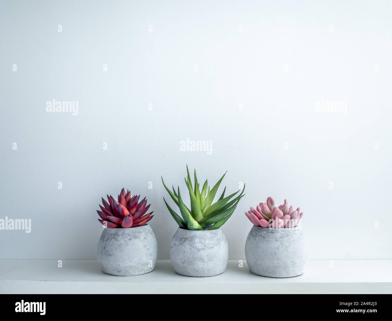 Concrete pots minimal style. Pink, red and green succulent plants in modern round concrete planters on wooden shelf isolated on white background with Stock Photo