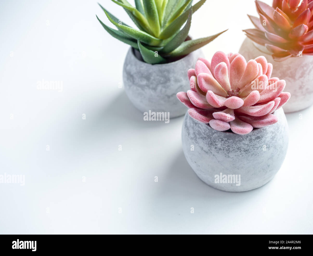 Concrete pots minimal style. Pink, red and green succulent plants in modern round concrete planters on white background with copy space, top view. Stock Photo