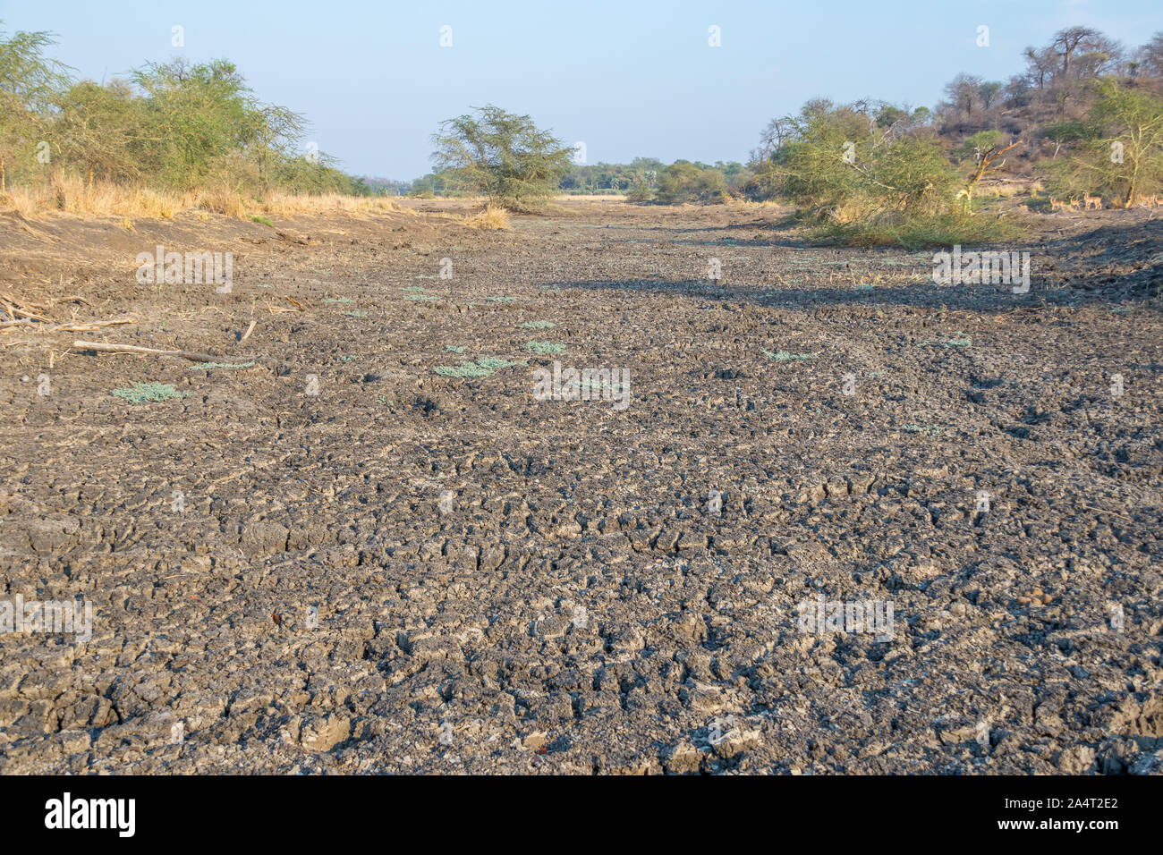 Dry flood plains of the Limpopo river in the northern Kruger National Park in South Africa image in landscape format with copy space Stock Photo
