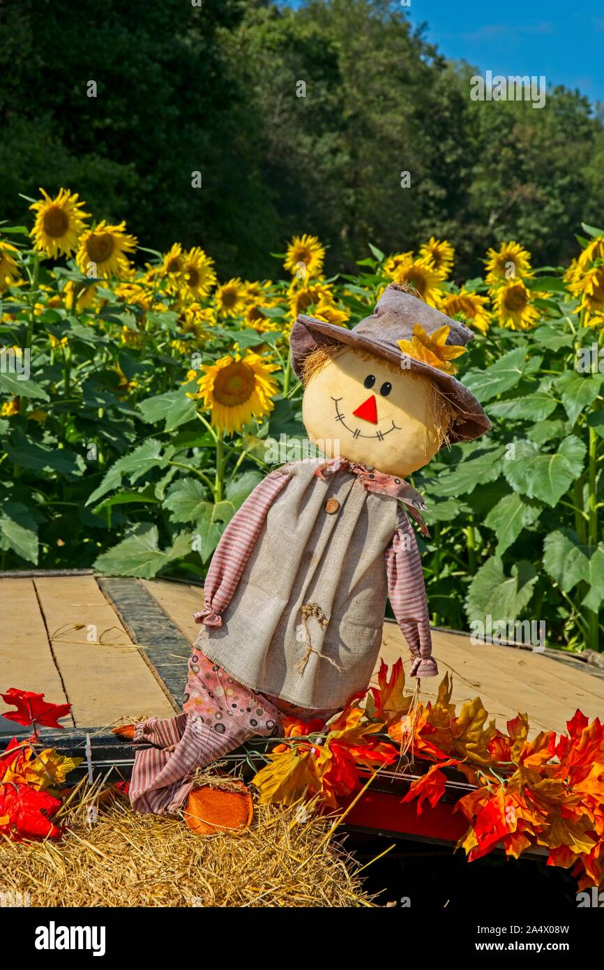 Fall Sunflowers  Scarecrow Country wre