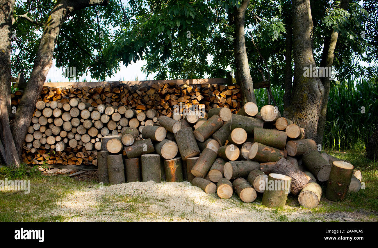 pile of logs in forest Stock Photo