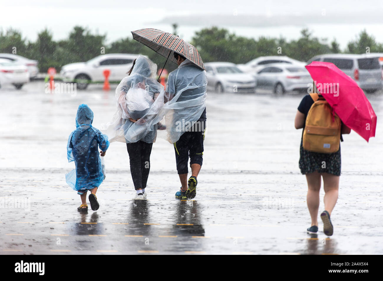JEJU - SEPT 28: JEJU - SEPT 28: Typhoon. Cold and windy day in Jeju Island on September 28. 2016 in South Korea Stock Photo
