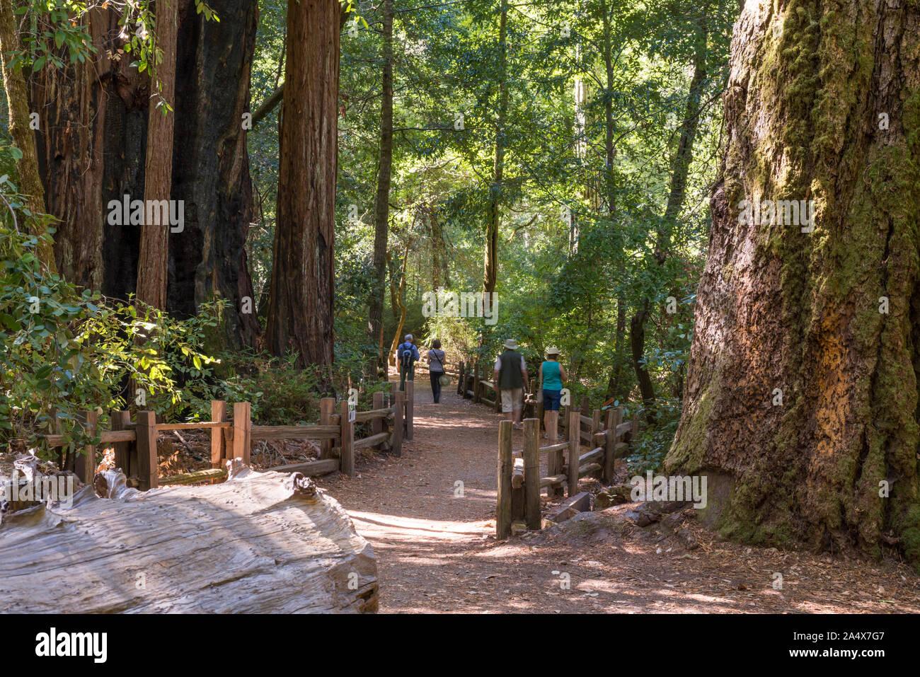 Big Basin Redwoods State Park. Santa Cruz county, California. Stock Photo