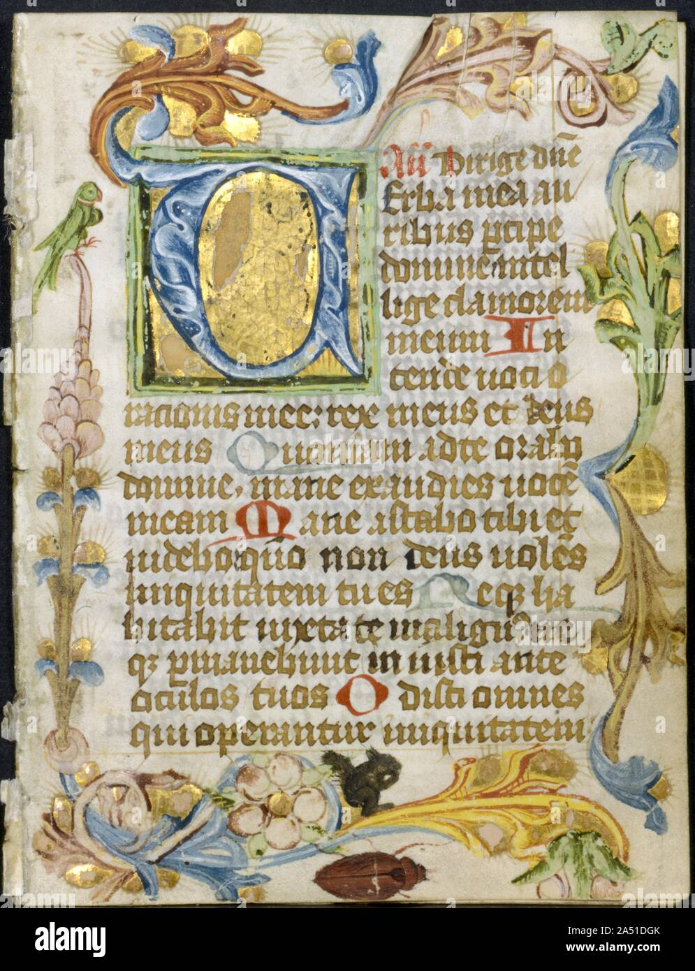 Leaf from a Book of Hours: Initial V with Floral Border, c. 1460-1500. Every medieval book of hours contained a section known as the Office of the Dead. This section was usually inserted toward the back of the book following the penitential Psalms and litanies, which set a tone of contrition, penitence, and forgiveness of sin. The Office of the Dead was intended to be recited principally in the context of a funeral. Its texts, comprising psalms and other readings, consisted of the hour of vespers (for recitation over the coffin the evening preceding a funeral mass), followed by matins and laud Stock Photo