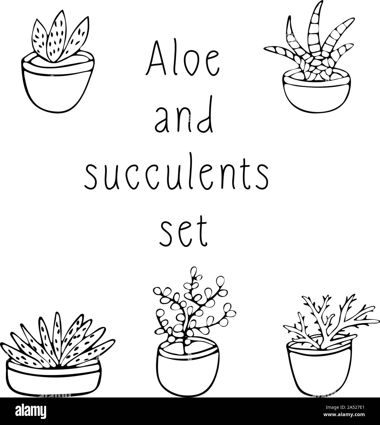 Black And White Set Of Succulents And Scarlet Hand Drawing Illustration On White Background Sketch Stock Vector Image Art Alamy