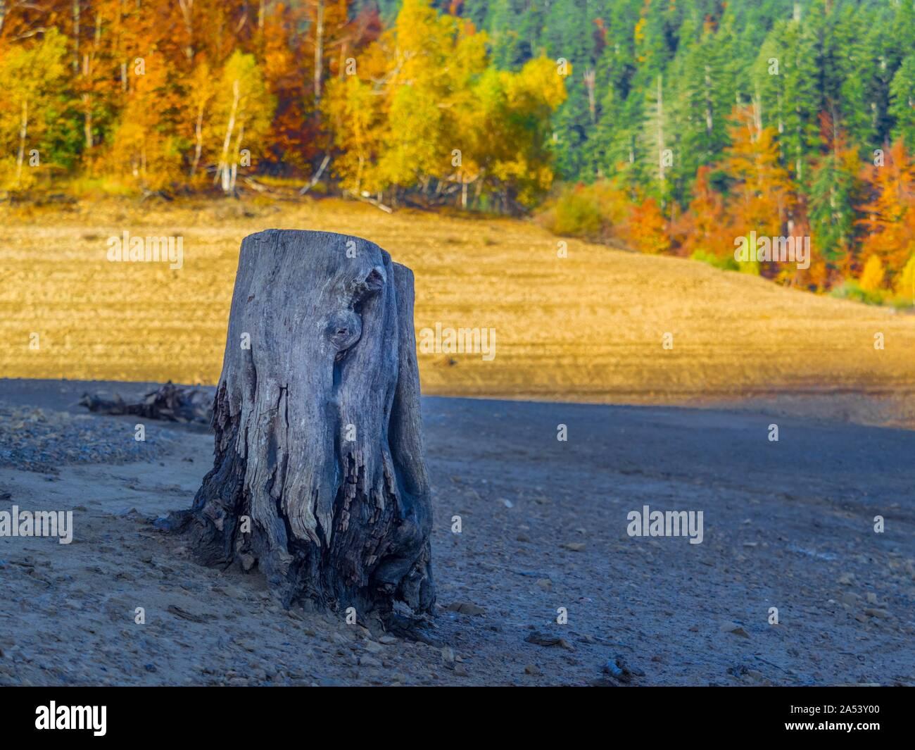 Morning sunlight forest country-side countryside Lokve lake Lokvarsko jezero Croatia lonely dried tree stump in foreground Stock Photo
