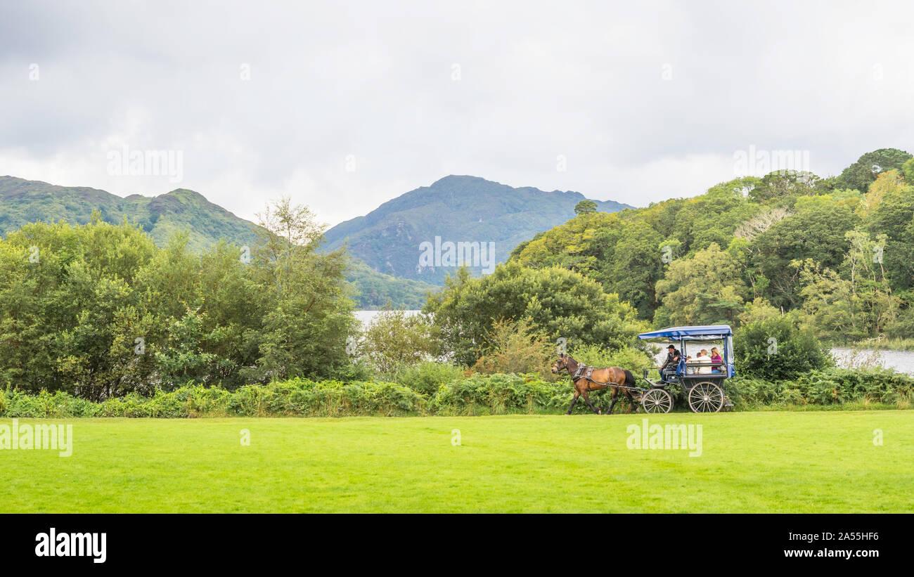 Killarney Falconry - Killarney, Ireland - TripAdvisor