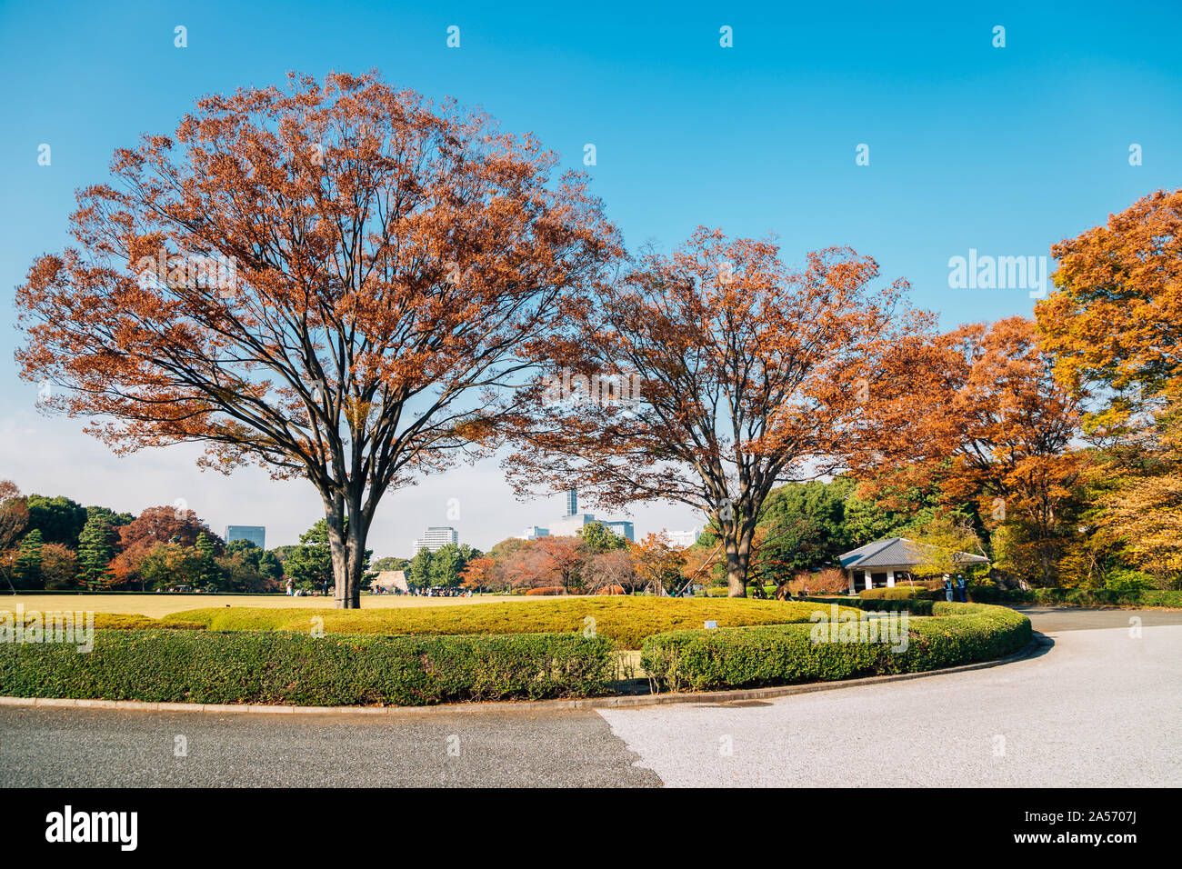 Imperial Palace East Gardens at autumn in Tokyo, Japan Stock Photo