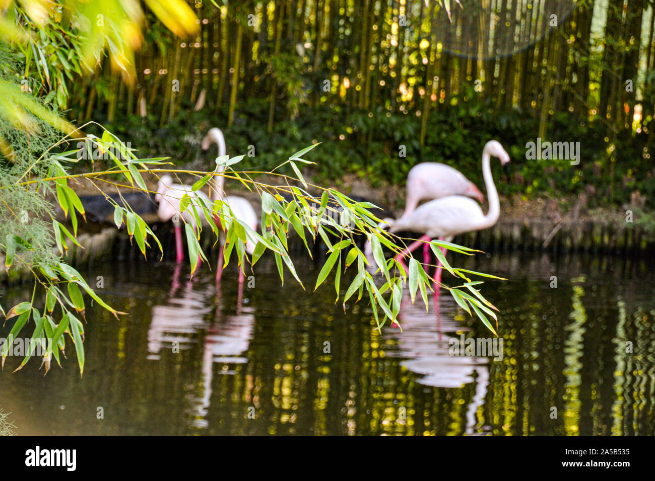 Pelikan im Zoo Punta Verde in Lignano (Italien) / Tierpark in Lignano / Sehenswürdigkeit in Lignano (Italien) Stock Photo