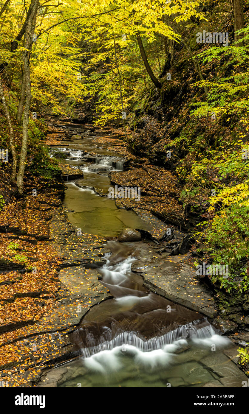 A calm stream deep in Fillmore Glen reflects the gold colors of Autumn in Moravia, New York. Stock Photo