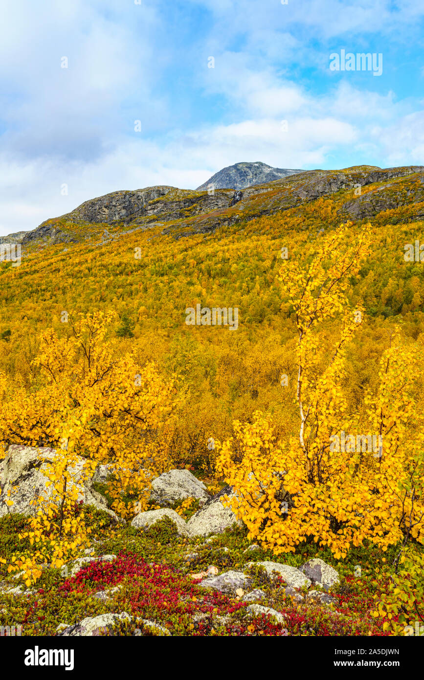 Autumn landscape with yellow leaves, red leaves on mountain bearberry, mountain in background, Stora sjöfallets national park, Laponia, Swedish Laplan Stock Photo