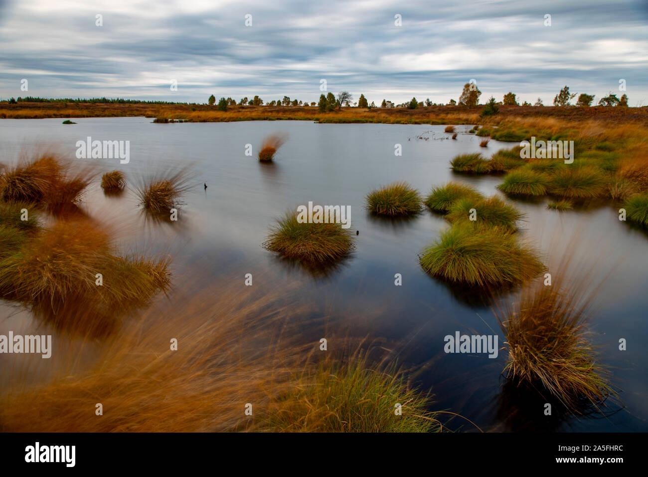 Belgium, Wallonia, the High Fens, high moor, in the region Eifel and Ardennes, nature park High Fens Eifel, in the Brackvenn, near Mützenich, pond, Stock Photo