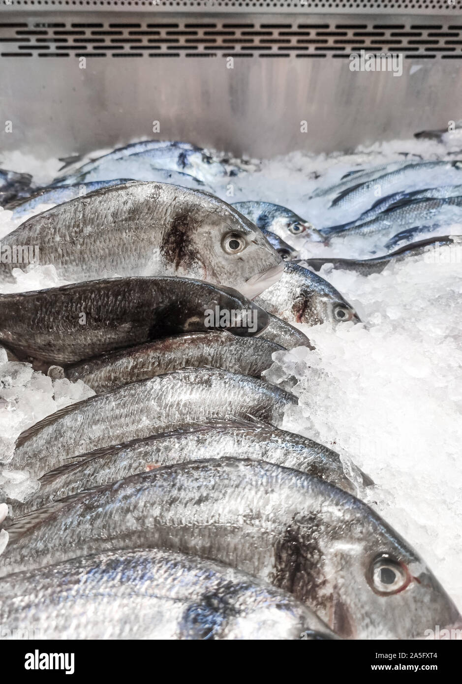 Sea bream Sparus aurata on ice at the seafood booth. Dorada fish or gilt-head bream on ice background sale in supermarket Stock Photo