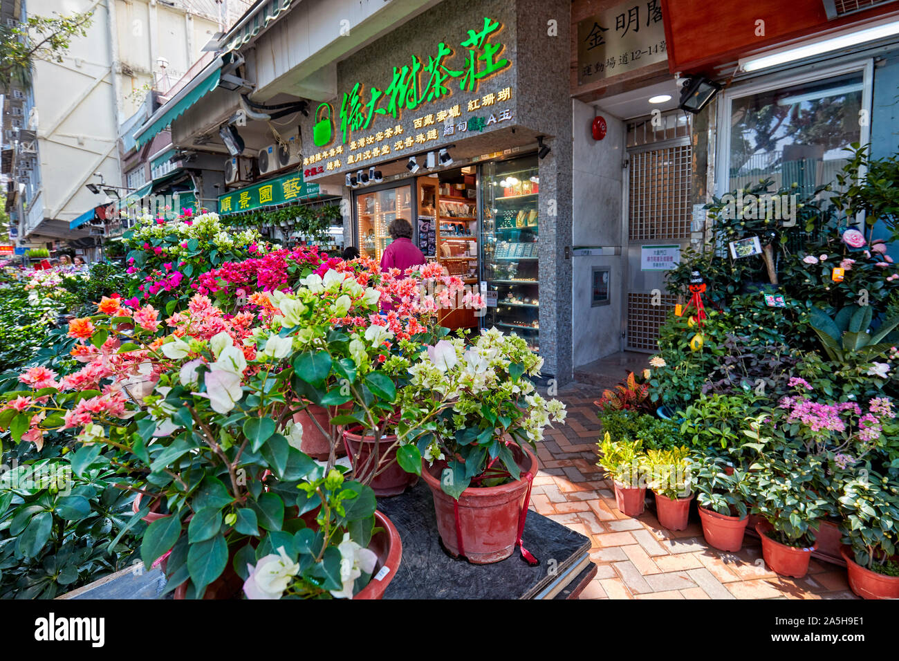 Potted Houseplants For Sale At Flower Market Road Kowloon Hong
