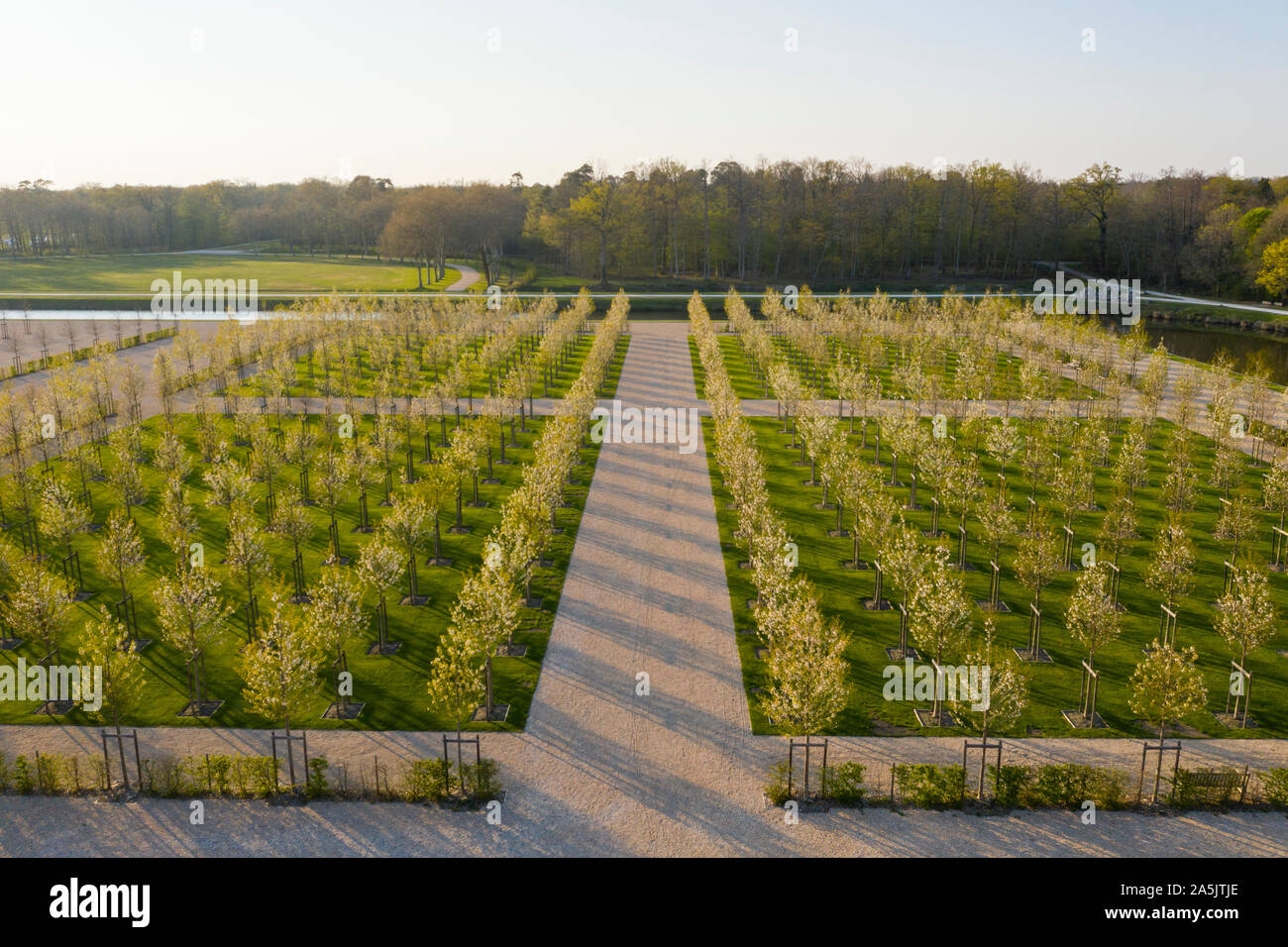France, Loir et Cher, Loire Valley listed as World Heritage by UNESCO, Chambord, royal castle, the French gardens, planting of double-flowered wild ch Stock Photo