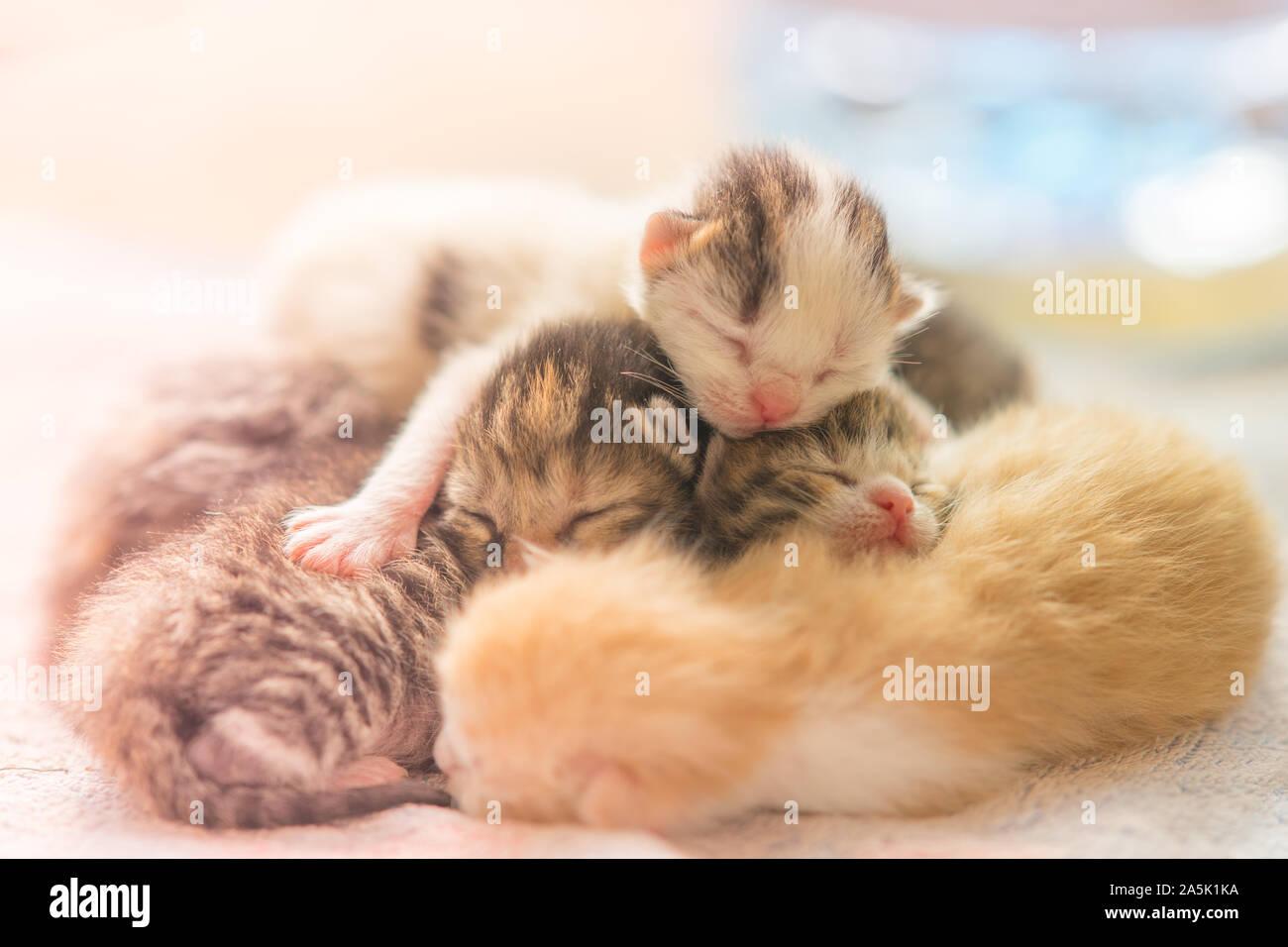 Newborn Kittens Sleeping Cute Baby Animals Sleep Stock Photo Alamy