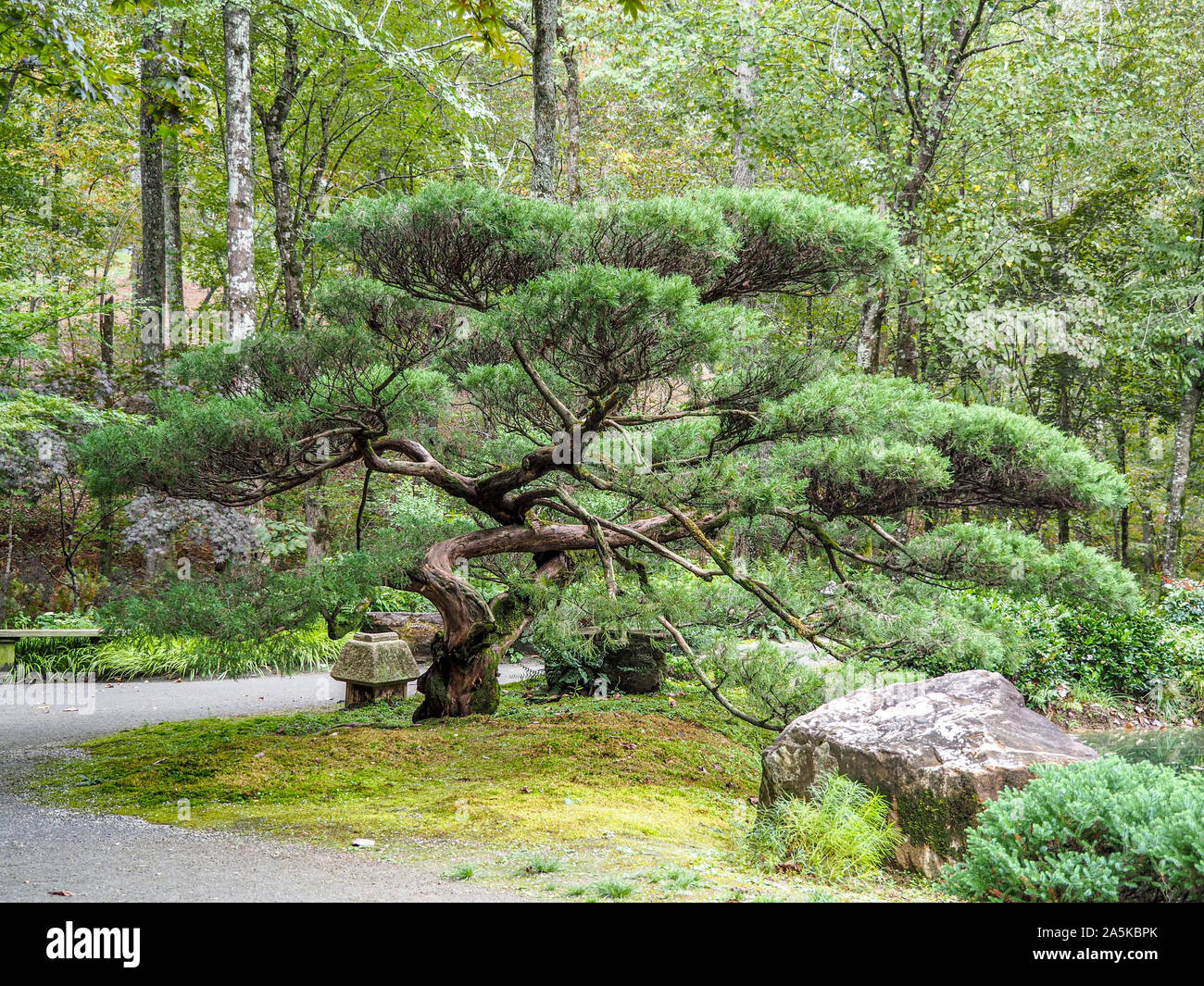 Bonsai Trees Oriental High Resolution Stock Photography And Images Alamy