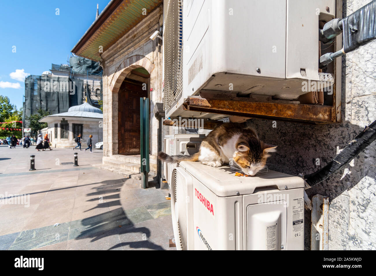 A multi color stray tabby cat eats dry food behind a building in the Sultanahmet district of Istanbul, Turkey. Stock Photo