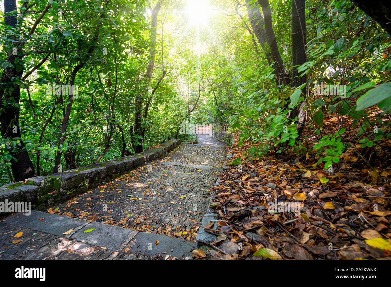 Sunlight flares through the dense trees after a light rain on a stone pathway leading down from the cemetery and park on Castle Hill in Nice, France. Stock Photo